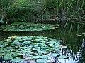 Botanischer Garten Seerosenteich.JPG