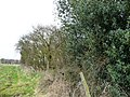 Boundary between fields and woodland - geograph.org.uk - 1768616.jpg
