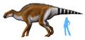 Brachylophosaurus NT alternate.png