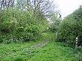 Brampton Wood - Birch Quarter - geograph.org.uk - 444758.jpg