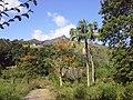 Brasil Brasil RuralRural - panoramio.jpg