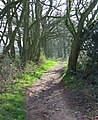 Bridleway, Wrottesley Old Park, Staffordshire - geograph.org.uk - 393343.jpg