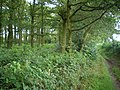 Bridleway and woods near Nurton - geograph.org.uk - 1410715.jpg
