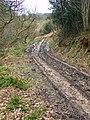 Bridleway to Halleykeld Spring - geograph.org.uk - 1193437.jpg