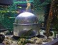 Bristol Aquarium 7.jpg
