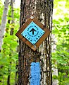Bruce Trail - side trail.JPG