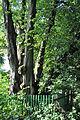 Buchach-Gnizdo-lyp-n2-14070894.jpg