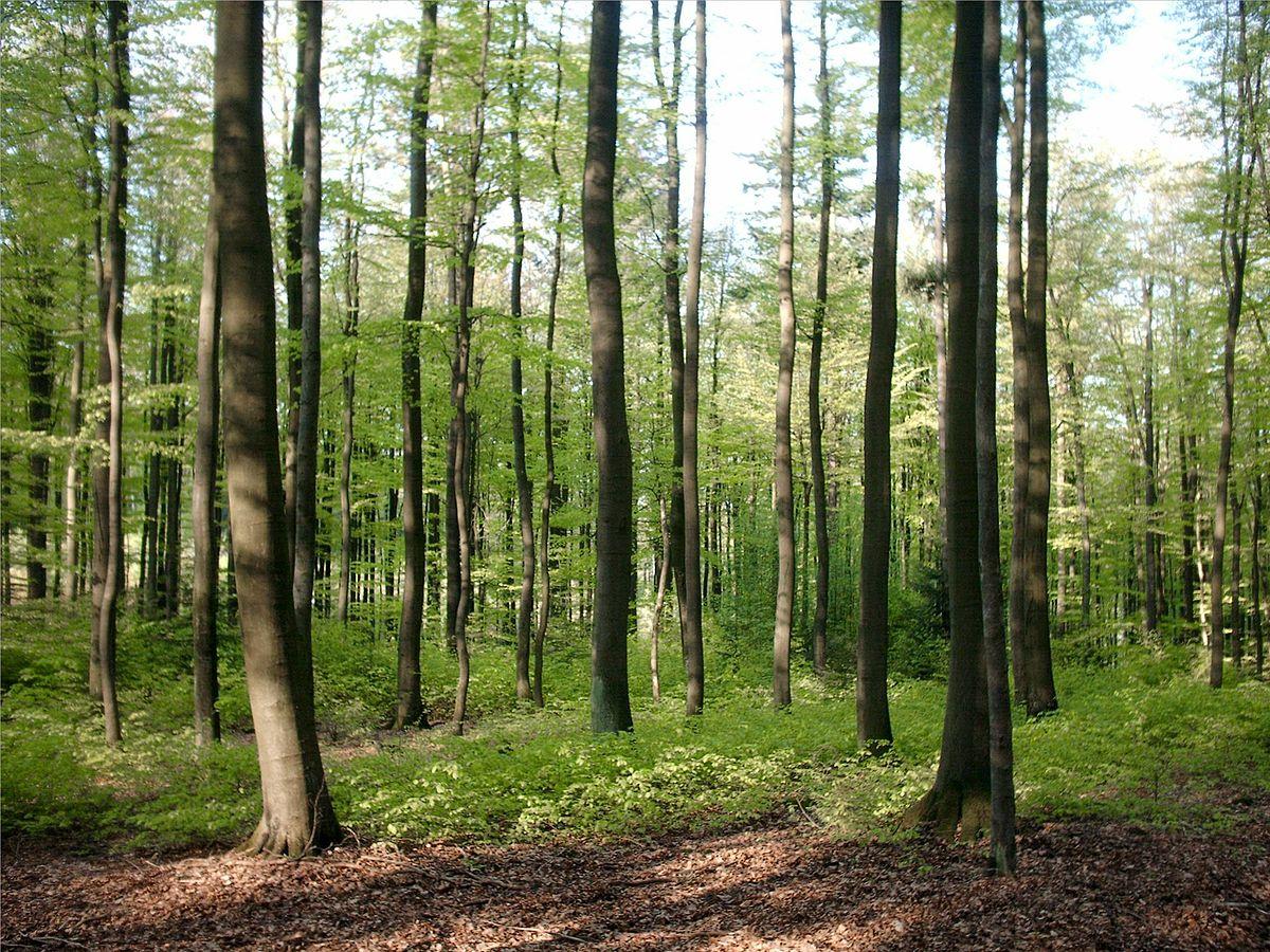 Wald In Deutschland Wikipedia
