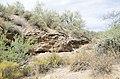 Butcher Jones Trail to Pinter's Point Loop, Tonto National Park, Saguaro Lake, Ft. McDowell, AZ - panoramio (139).jpg