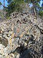 Bygdoy oslo IMG 2906 cambrosiluran geology.JPG