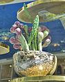 Cactus (6090687192).jpg