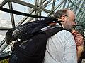 Calyptorhynchus banksii -camera bag-8a.jpg