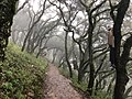 Caminata hacia la cima.jpg