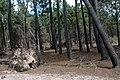 Camino hacia Laguna de Brioso Valizas Rocha Uruguay - panoramio (1).jpg