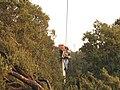 Canopy de Paula - panoramio.jpg