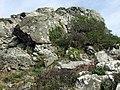 Carn Perfedd - geograph.org.uk - 1257103.jpg