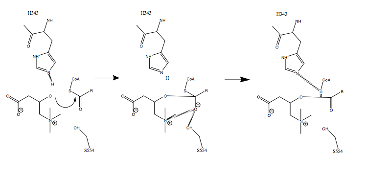 File:Carnitine Acetyltransferase Mechanism (His343).tiff