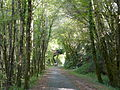 Carsac-Aillac voie verte (3).JPG