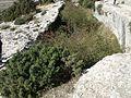 Castellar de Meca octubre dos mil dieciseis 05.jpg
