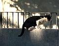 Cat (356368430).jpg
