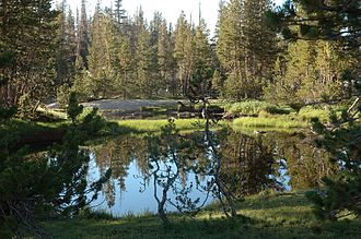Ecology of the Sierra Nevada - Palustrine wetland in Yosemite National Park.