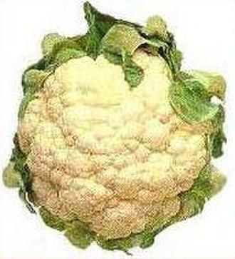Cauliflower - Cauliflower, cultivar unknown