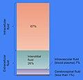 Cellular Fluid Content.jpg