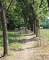 Chřiby, okolí hradu Buchlova (5).JPG