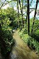 Chemin de Chamort à Gif-sur-Yvette le 20 mai 2017 - 10.jpg