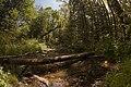 Chilliwack River Provincial Park 02.jpg