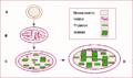 Chloroplast en.png