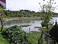 Cisnes cuello ngro, Chacao,Chiloe - panoramio.jpg