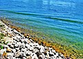 Clear water in the boat races canal - panoramio.jpg
