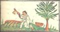 Coatli (lignum nephriticum) - Florentine Codex f.203v.png