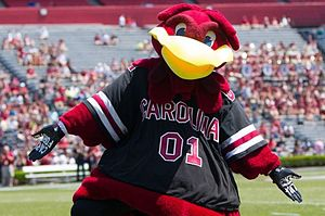 Cocky (mascot) - Image: Cockyspringgame