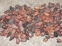 Cocoa beans P1410151.JPG
