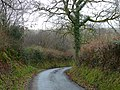 Coedwig ger Llansadwrn - Woodland near Llansadwrn - geograph.org.uk - 1087660.jpg