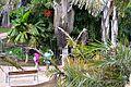 Colección Palmetum de Santa Cruz de Tenerife 15.JPG