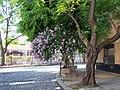 Colegiales - Buenos Aires - panoramio.jpg