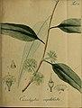 Collectio plantarum tam exoticarum, quam indigenarum, cum delineatione, descriptione culturaque earum (20324086616).jpg