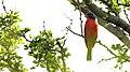 Colorín Sitecolores - panoramio.jpg