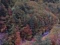 Colores - panoramio.jpg