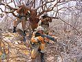 Combatente da Caatinga (26700210465).jpg