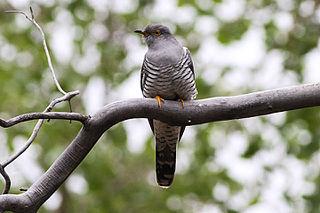 Cuckoos bring easter eggs in switzerland