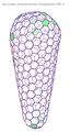 Conic capsid.png