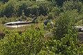 Coringa reserve forest park mangrove forest 12.jpg