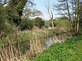 Corpusty - the River Bure - geograph.org.uk - 1257467.jpg