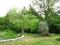 Costigiola-olivo e bagolaro-1.jpg
