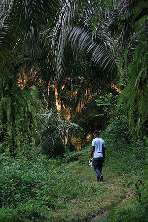 Bassa people (Cameroon) - Tayap, a small village in Bassa land