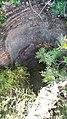 Cubo del molino de en medio Lorcha-l´Orxa (Alicante).jpg